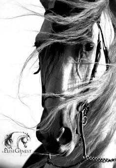 Horse Photography: Elise Genest