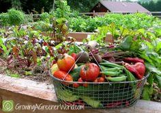 Abundant Harvest | Growing a Greener World garden wishlist, garden harvest