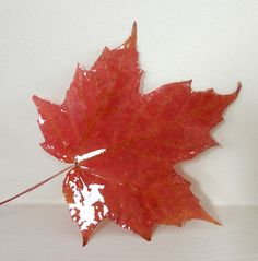 You can coat shells and leaves with resin.