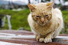 Mirringa mirronga, la gata morronga by dalicarrascal, via Flickr
