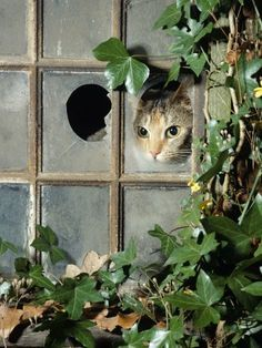 Tabby playing hide and seek in the old potting shed.  How adorable!