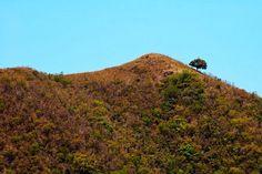 Es bien probable que si ha transitado de San Juan a Ponce le haya dado curiosidad un árbol. Este árbol no es nada mas y nada menos que un árbol de Mangó y el mismo se encuentra a una altura de 1,898 pies sobre el nivel del mar.