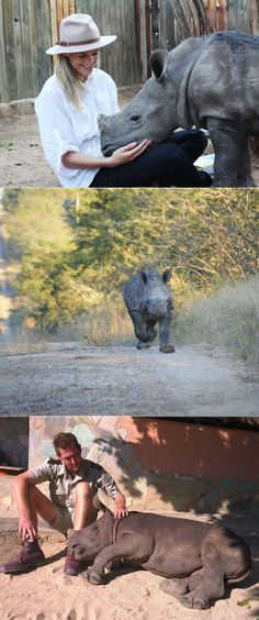 exPress-o: The little baby rhino who can't sleep