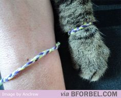 Friendship bracelet for you and your cat... Hahaha