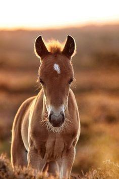 golden foal byLee Crawley
