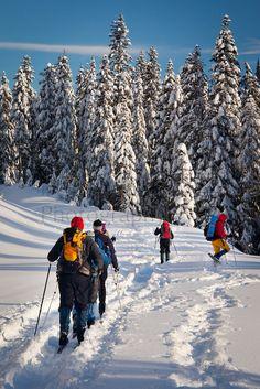winter snowshoe trails, Reflection Lakes, Mount Rainer National Park, WA