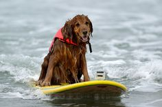 King, the surfer dude