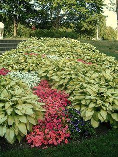 hosta garden...i love hostas!