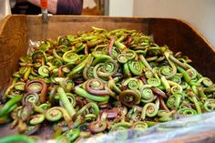 Fiddlehead Ferns  and some recipes for them