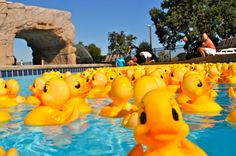 Rubber Ducky Derby celebrates its 25th anniversary!