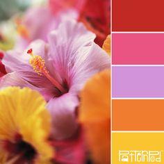 beats, hawaiian flowers, colors, hibiscus flower, beauti, flowers garden, floral, flower photography, tropical flowers