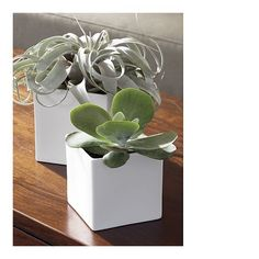 Square white vases from Crate & Barrel