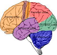 Ten Brain Based Learning Strategies