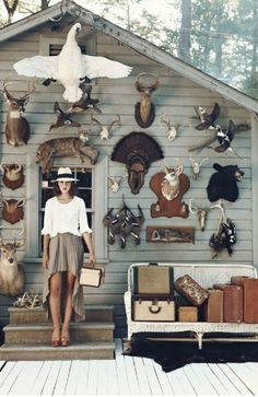 - taxidermy -