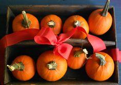 Fall Wedding Favors - Articles & Advice | mywedding.com idea, wedding favors, orang, fall decor, fall yall, pumpkin favor, happi fall, fall weddings, blog