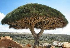 The world's most mysterious places - Socotra