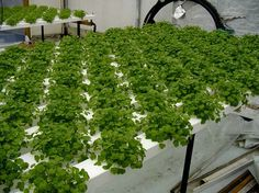 Hydroponics is the NOW, and the FUTURE, imo.