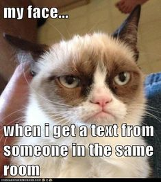 Lolcats: my face when... #grumpycat