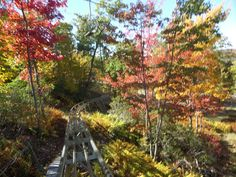 "Camelback Mountain Adventures features PA's only Mountain Coaster! 4500"" of pure excitement! #MountainCoaster #Adventures #Poconos #PoconoMtns #Fallfoliage"