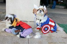 #Avengers dog costumes