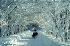 Snowmobiling...looks awesome!