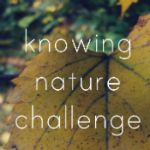 Online resources for fun with science w kids