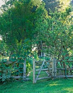gate/fence love #potager #edible_garden #fence #garden_gate #garden