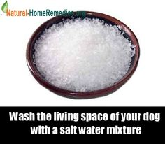Home Remedies - Natural Remedies - Home Remedy - http://www.natural-homeremedies.org/blog/home-remedies-for-fleas/