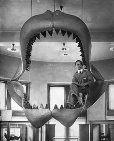 H.S. Rice - Museum Staff With Fossil Shark Jaws Under Restoration, January, 1927
