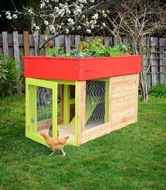 Cute and creative idea for keeping chickens in small yards.  That way they can roam when they want to, you'll have the coop and with your garden on top, and your own eggs :D I LOVE IT!!