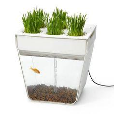 Gift Idea: Back to the Roots 'Aquafarm' Aquaponic Garden  Self Cleaning Fish Tank
