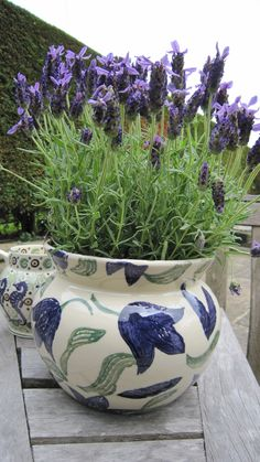Emma Bridgewater - Potted French Lavender