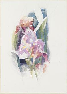 Charles Demuth (American, Lancaster, 1883–1935). Purple Iris, ca. 1920. The Metropolitan Museum of Art, New York. Alfred Stieglitz Collection, 1949 (49.70.62)