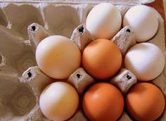 5 reasons why you shouldn't throw away those eggshells...garden fertilizer and slug repellent