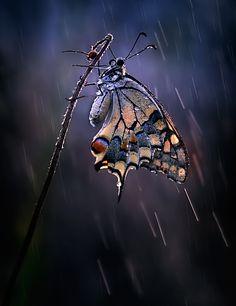 Butterfly under the summer rain