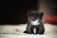 Kitten by Petrovna
