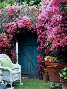 bougainvillea, secret gardens, blue garden, blue doors, garden gates, climbing roses, garden doors, the secret garden, flower
