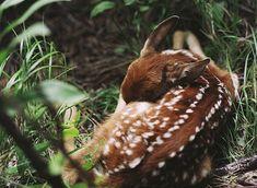 fawn | Tumblr
