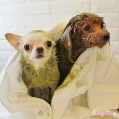 SPA DAY ♥