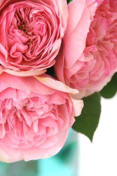 blue mason jars, english roses, pink roses, pink flowers, colors, garden, pink peonies, heavy heart, vintage flowers