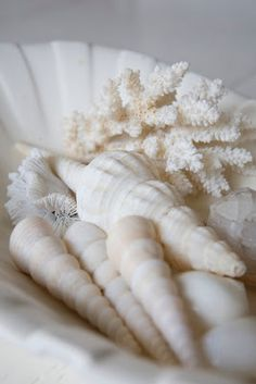 Spiral shells and Coral