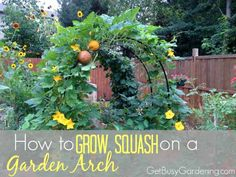 How to Grow Squash o