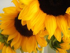 Sunflowers // See the beauty in everything is one way to get in touch with your inner beauty :)