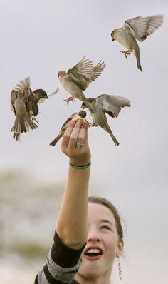 feeding the birds::