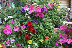 Bloom Masters... the ultimate hanging basket. The patented technology of this container makes it an efficient system for watering, and getting oxygen to your flowers. They will be the largest hanging baskets on the block. $79.95