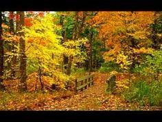 Richard Clayderman - Love Story (+playlist)