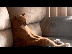 Fully Feline Cat Vid