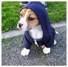 Puppy swag