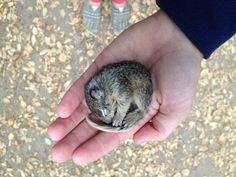 Saving a frozen baby squirrel