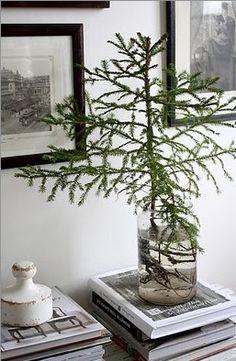 tree in a jar!